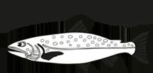 Salmosalarfishing